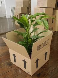 plantas-mudanza-1